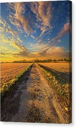 To Show Us The Way Canvas Print by Phil Koch