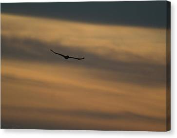 To Soar - Free Canvas Print by Douglas Barnett