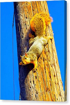 Canvas Print - To Squirrels And To Me by Guy Ricketts