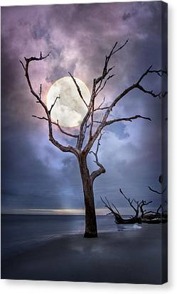 To The Moon Canvas Print by Debra and Dave Vanderlaan