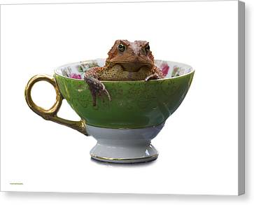 Toad In A Teacup Canvas Print by Ron Jones