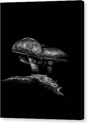 Toadstools On A Toronto Trail No 4 Canvas Print by Brian Carson
