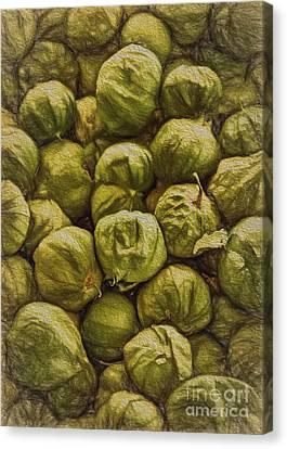 Tomatillos Canvas Print by Janice Rae Pariza
