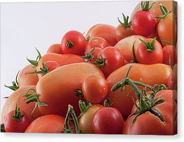 Canvas Print featuring the photograph Tomato Hill by James BO Insogna