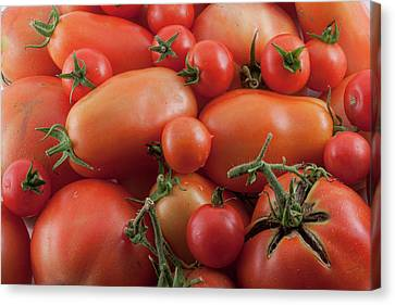 Canvas Print featuring the photograph Tomato Mix by James BO Insogna