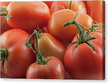 Canvas Print featuring the photograph Tomato Stems by James BO Insogna
