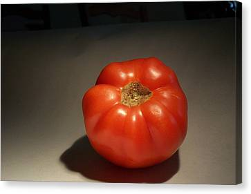 Tomato Still Life Canvas Print by Bryan Knox