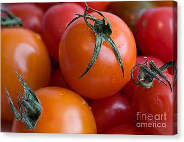 Tomatoes  Canvas Print by A New Focus Photography