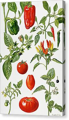 Tomatoes And Related Vegetables Canvas Print by Elizabeth Rice