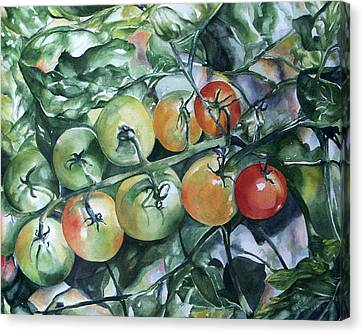 Canvas Print featuring the painting Tomatoes In Dad's Garden by Nadine Dennis