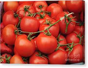 Tomatoes Canvas Print by Jelena Jovanovic