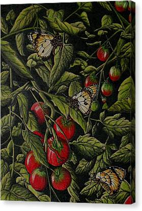 Tomatoes Canvas Print by Joshua Armstrong