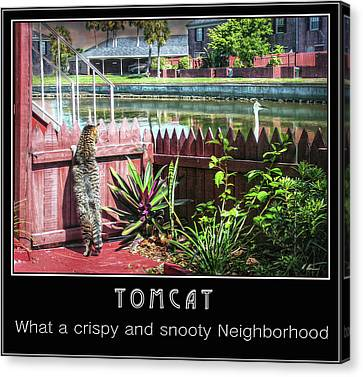 Canvas Print featuring the photograph Tomcat Breakfast by Hanny Heim