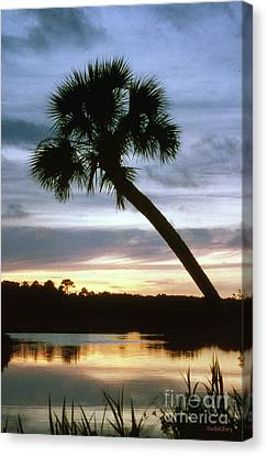 Tomoka River Sunset Canvas Print by Dodie Ulery