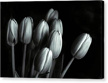 Canvas Print featuring the photograph Tonal Tulips by Jessica Jenney