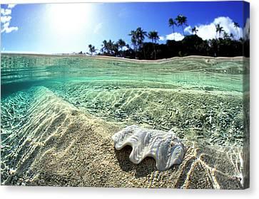 Tonga Canvas Print - Tongan Clam Shell. by Sean Davey