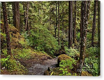 Tongass National Forest Canvas Print by John Greim