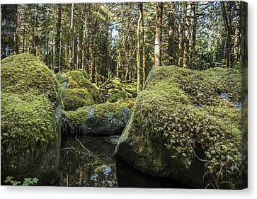 Tongass National Forest Canvas Print by Robin Williams