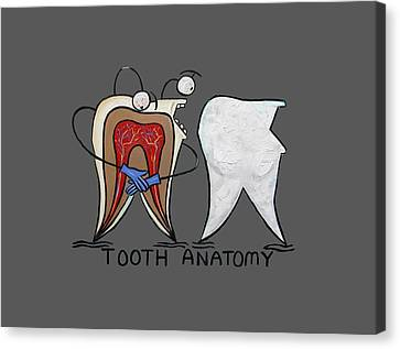 Tooth Anatomy T-shirt Canvas Print by Anthony Falbo