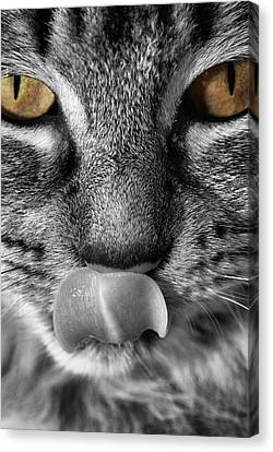 Toots3 Canvas Print by Fraser Davidson