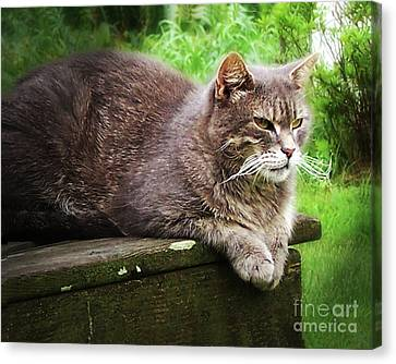Canvas Print featuring the photograph Top Cat by Pete Hellmann