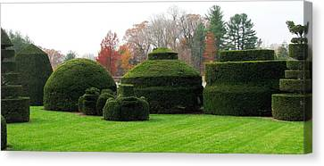 Topiary Garden Canvas Print by Angela Davies