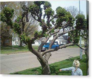 Topiary Pella Tree Canvas Print