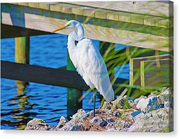 Topsail Island Canvas Print - Topsail Egret by Betsy Knapp