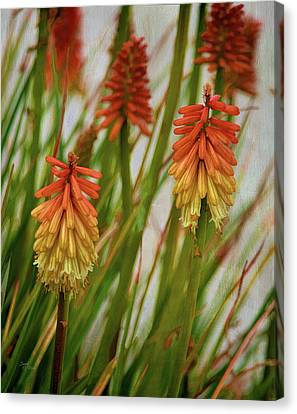 Torch Lily At The Beach Canvas Print by Sandi OReilly