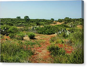 Torrey Pines California - Colourful Verdant And Arid Juxtaposition Canvas Print