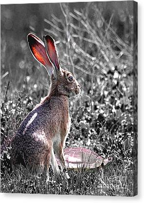 Tortoise And The Hare Canvas Print by Animals Art