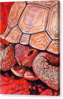 Tortoise Canvas Print by Bonnie Kelso