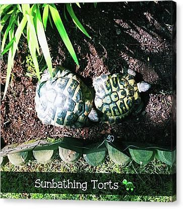 #tortoise #torts #sunbathing #garden Canvas Print by Natalie Anne