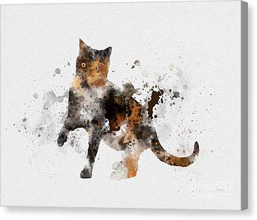 Tortoiseshell Cat Canvas Print by Rebecca Jenkins