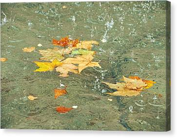 Tossed Leaves Canvas Print by JAMART Photography