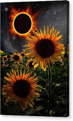 Total Eclipse Of The Sun Over The Sunflowers Canvas Print by Debra and Dave Vanderlaan