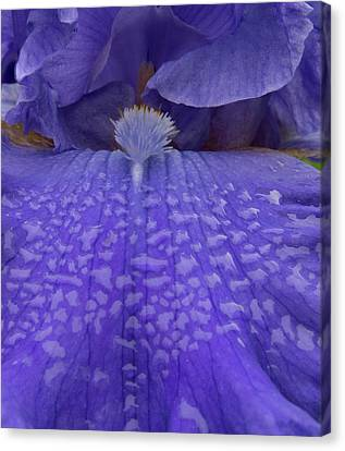 Canvas Print featuring the photograph Totally Blue Iris by Jean Noren