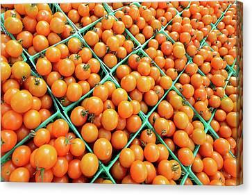 Totally Tomato Canvas Print