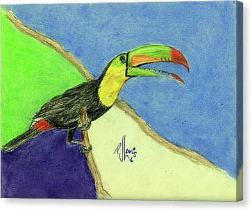 Toucan Canvas Print by P J Lewis