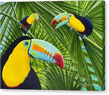Toucan Threesome Canvas Print