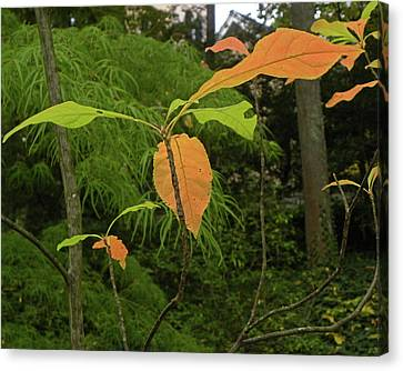 Canvas Print featuring the photograph Touch Of Fall by Larry Bishop