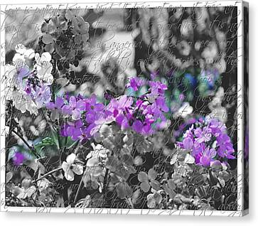Touch Of Phlox Canvas Print