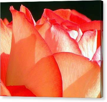 Touch Of Rose Canvas Print by Karen Wiles