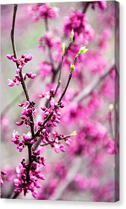 Touch Of Spring Canvas Print