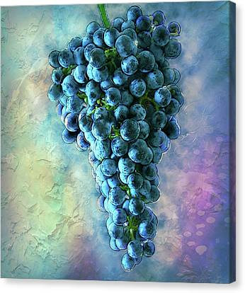 Touch Of The Grape 2 Canvas Print by Jack Zulli