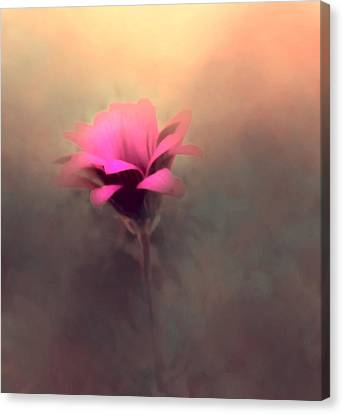 Touched By The Light Canvas Print