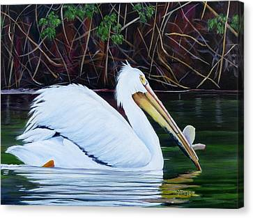 Touring Pelican Canvas Print by Marilyn McNish