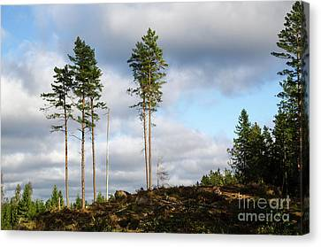 Canvas Print featuring the photograph Towards The Sky by Kennerth and Birgitta Kullman