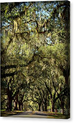 Towering Canopy Canvas Print
