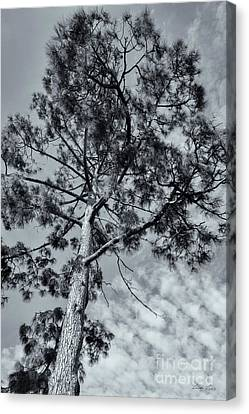Canvas Print featuring the photograph Towering by Linda Lees